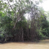delta-parnaiba-manguezal-piauitour