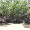 Passeio Delta do Rio Parnaiba – Litoral Piauí (15)